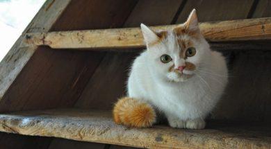 Stray Animal Care Vidin, Bulgaria
