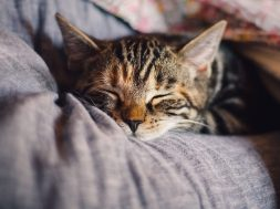 cat-4189697_1280