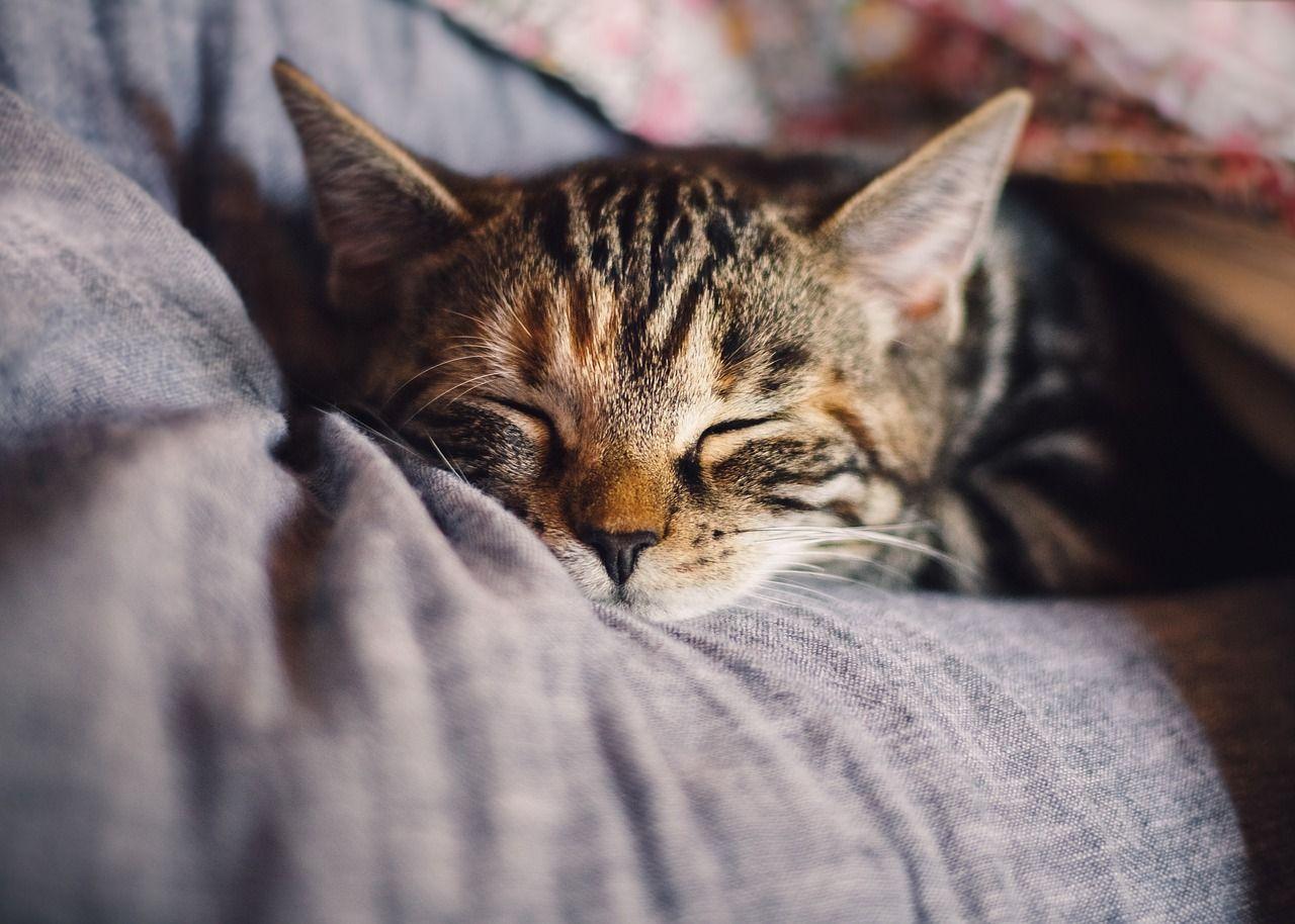 Международен ден на котките