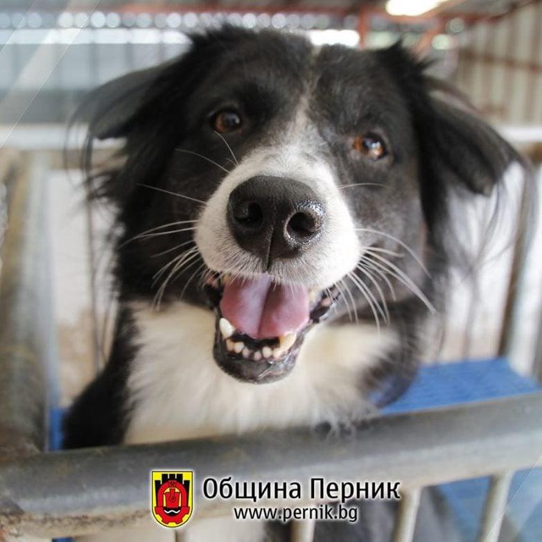 Кампанията по кастриране на домашни животни продължава